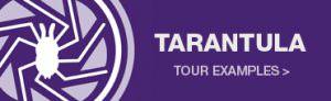 Tarantula Virtual 360 tours in Norwich
