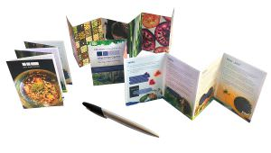 GGS Concertina leaflet design